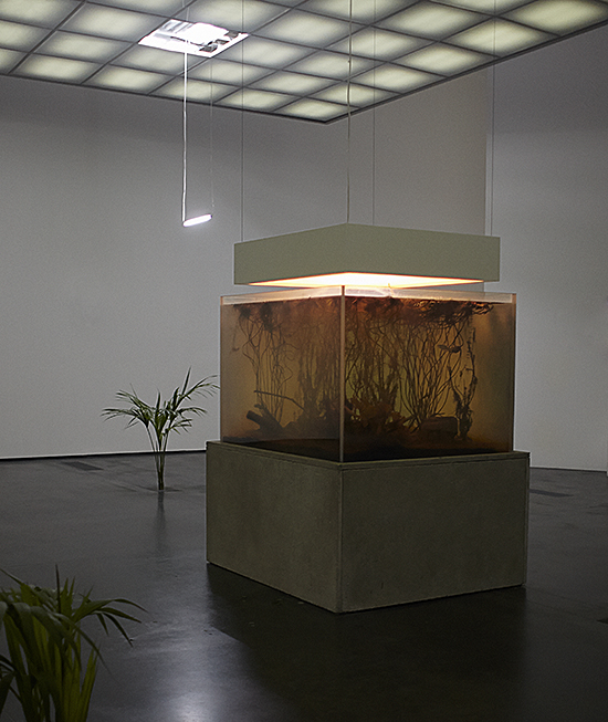 Pierre Huyghe, Nymphéas Transplant (14-18), 2014 Mixed-media installation, Live pond ecosystem, light box, switchable glass, concrete, 189 × 143,5 × 128,7 cm. © Photo: Ola Rindal. Courtesy of the artist, Esther Schipper, Berlin, Hauser and Wirth, London, Marian Goodman Gallery, New York. © VG Bild-Kunst, Bonn 2016.