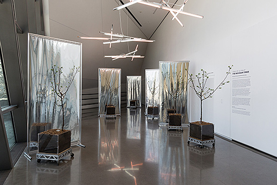 "Sam Van Aken, Installation view of ""Tree of 40 Fruit: The Michigan Trees"", 2016. Eli and Edythe Broad Art Museum  at Michigan State University, East Lansing, MI, USA. Photo by Eat Pomegranate Photography."